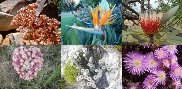 FlowersCollage