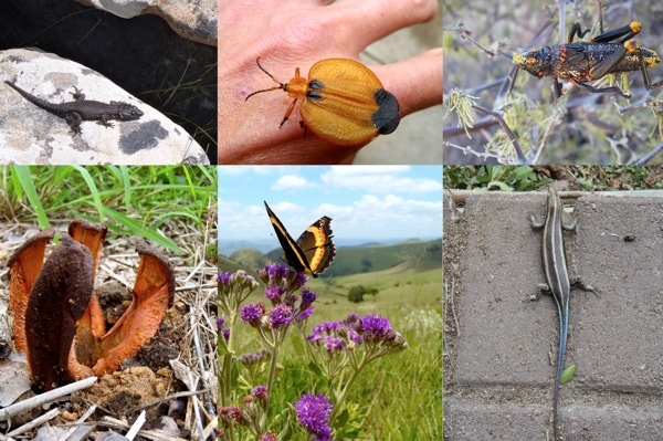 InsectsCollage