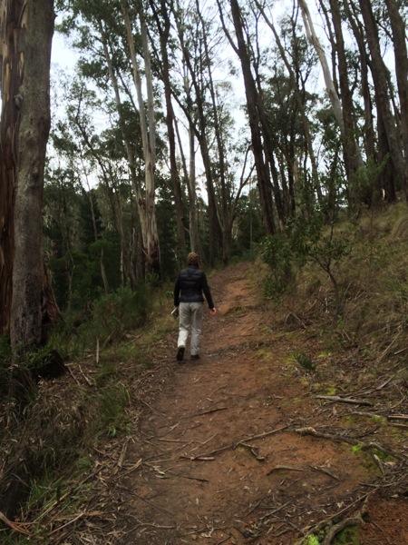walking through tall trees
